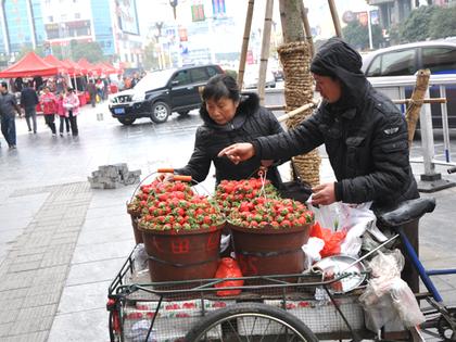 イチゴ売り 023.jpg