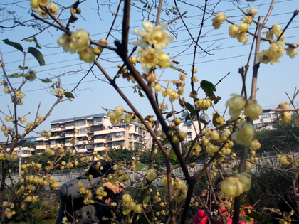 2014年2月3日桂林9.JPG