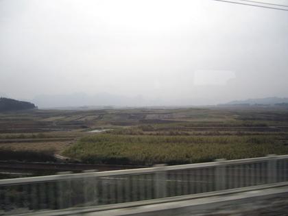 サトウキビ畑26.JPG