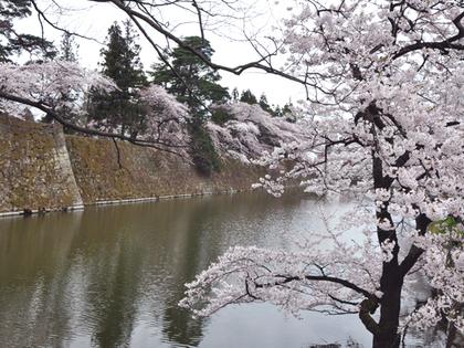2014円4月21日.鶴ヶ城28.JPG