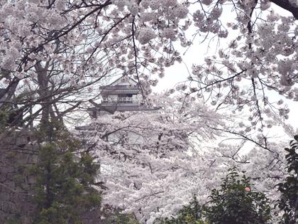 2014年4月会津鶴ヶ城と桜4.JPG