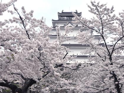 2014年4月鶴ヶ城と桜858.JPG