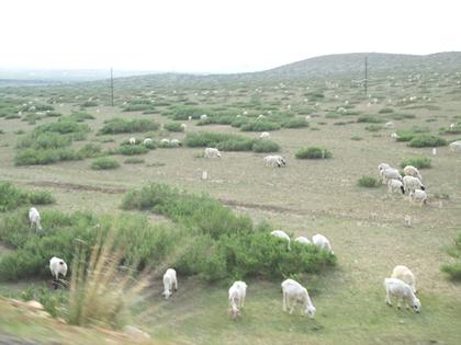 夕暮時羊群れ_3235.JPG