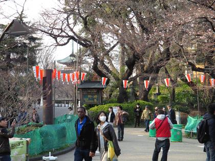上野的桜.JPG
