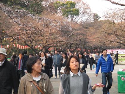 桜16.3.23.JPG