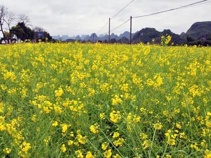 2016年3月桂林的春.jpg