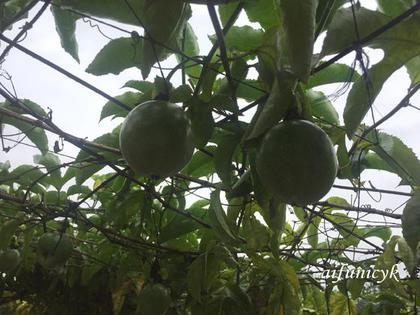 2016.12.桂林的水果.jpg