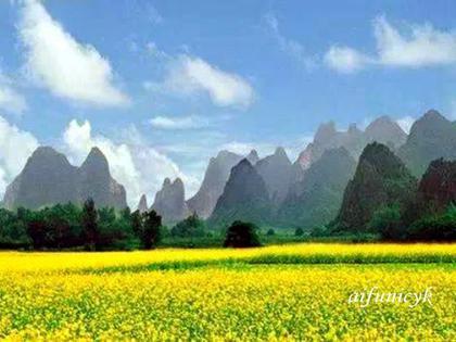 桂林油菜的春.jpg